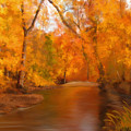 New England Autumn In The Woods by Becky Herrera