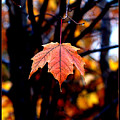 New England Fall - Lone by William Bray