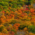 New England Fall Foliage Peak  by Juergen Roth