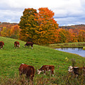 New England Four Seasons - Autumn On Jenne Farm In Reading Vermont by Toby McGuire