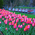New England Four Seasons Spring Boston Public Garden Tulips by Toby McGuire