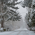 New England Four Seasons Winter Ipswitch Street Snow Covered Trees by Toby McGuire