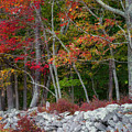 New England Stonewall by Bill Wakeley