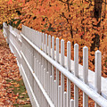 New England White Picket Fence With Fall Foliage by Edward Fielding