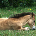New Forest Pony by Chris Day