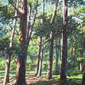 New Forest Trees With Shadows by Martin Davey