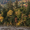 New Hampshire Color Along The Swift River by Bob Phillips