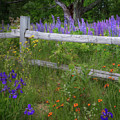 New Hampshire Wildflowers by Bill Wakeley