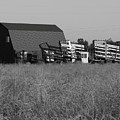 New Holland Bale Wagons by Troy Montemayor