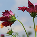 New Jersey Wildflowers In The Wind by Paul Ranky