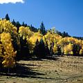 New Mexico Aspen by Troy Montemayor