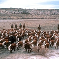 New Mexico Cattle Drive by Jerry McElroy