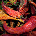 New Mexico Chili Peppers by Sharon Foelz