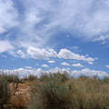 New Mexico Sand Grass Sky by Natey Freedman
