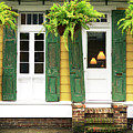 New Orleans Row House Plants by John Rizzuto