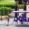 New Orleans Royal Carriage by Southern Tradition