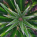 New Palm Leaves by Fred Jinkins