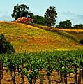 New Vineyard by Gary Brandes