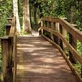 New Wood Bridge Park Trail by Michal Junasek
