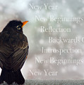 New Years Card by Lisa Knechtel