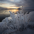 New Year's Eve, Frozen Shrub by Jakub Sisak
