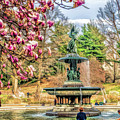 New York City Central Park Bethesda Fountain Blossoms by Christopher Arndt