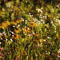 New York Wildflowers Xxvi by Tina Baxter