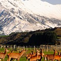 New Zealand Deer 3497 by PhotohogDesigns