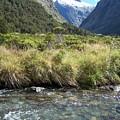 New Zealand Landscape 2 by Constance Drescher