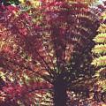 New Zealand Tree Fern Cross Process Matte by Joan Carroll