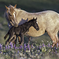 Newborn Filly At Dawn by Carol Walker