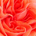Newport Orange by Pam Schmitt