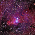 Ngc 2264 The Christmas Tree Cluster In Monoceros by Alan Vance Ley