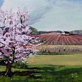 Niagara Vineyards Spring by Bruce Repei