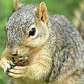 Nibbling by Bonfire Photography