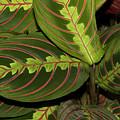 Nice Leaves by Elvira Ladocki
