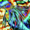Nicobar Pigeon Toooped Up  by Don Columbus