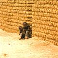 Niger Village Brothers by Robert M Brown II