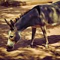 Nigerian Donkey by Jan Amiss Photography