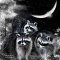 Night Bandits by Carol Cavalaris