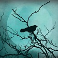 Night Bird by Patricia Strand