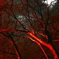 Night Blaze by Katherine Pearson
