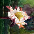 Night Blooming Cereus by Sharon Mick