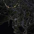Night. Branch Out. by Viktor Savchenko