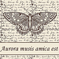 Night Butterfly On Old Letter by Long Shot