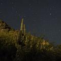 Night Cactus by Rachael Armstead