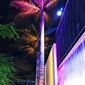 Night Colors - Palm Tree And Modern Architecture by Carlos Alkmin