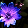 Night Flower by Ca Photography