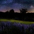 Night Flowers by Bill Wakeley