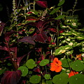 Night Flower's by Kevin Dunham